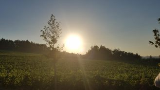 sunset-monverde