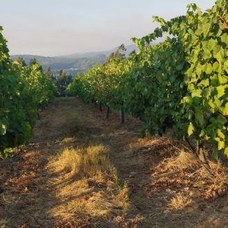 vineyard-monverde